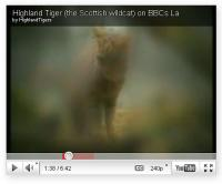 highland tiger photo