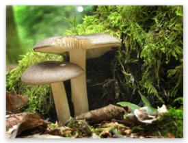 Tips on photography - autumn mushrooms by one-to-one photography course student Maria Leekblade