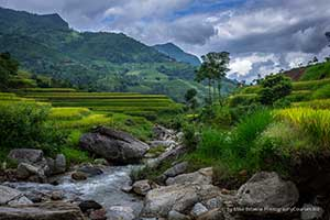 vietnam stream rice paddy
